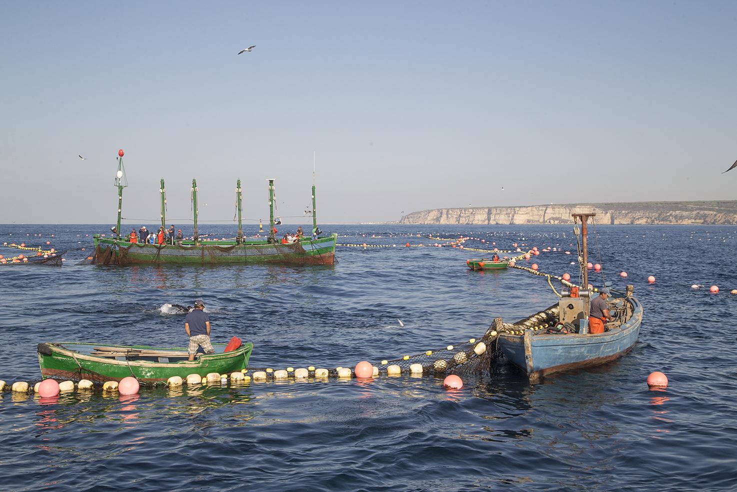 barcos de pesca de almadraba de atun rojo