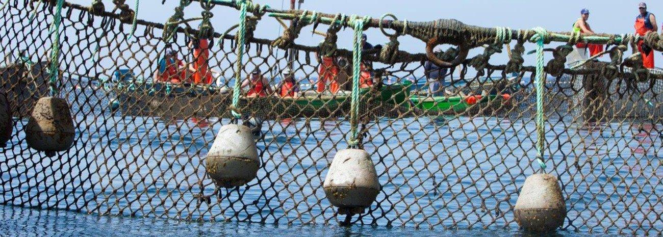 Aparejos de pesca de almadraba