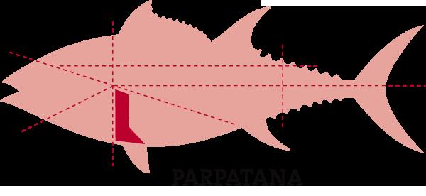 parpatana atún rojo