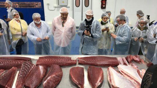 partes del atun rojo de almadraba