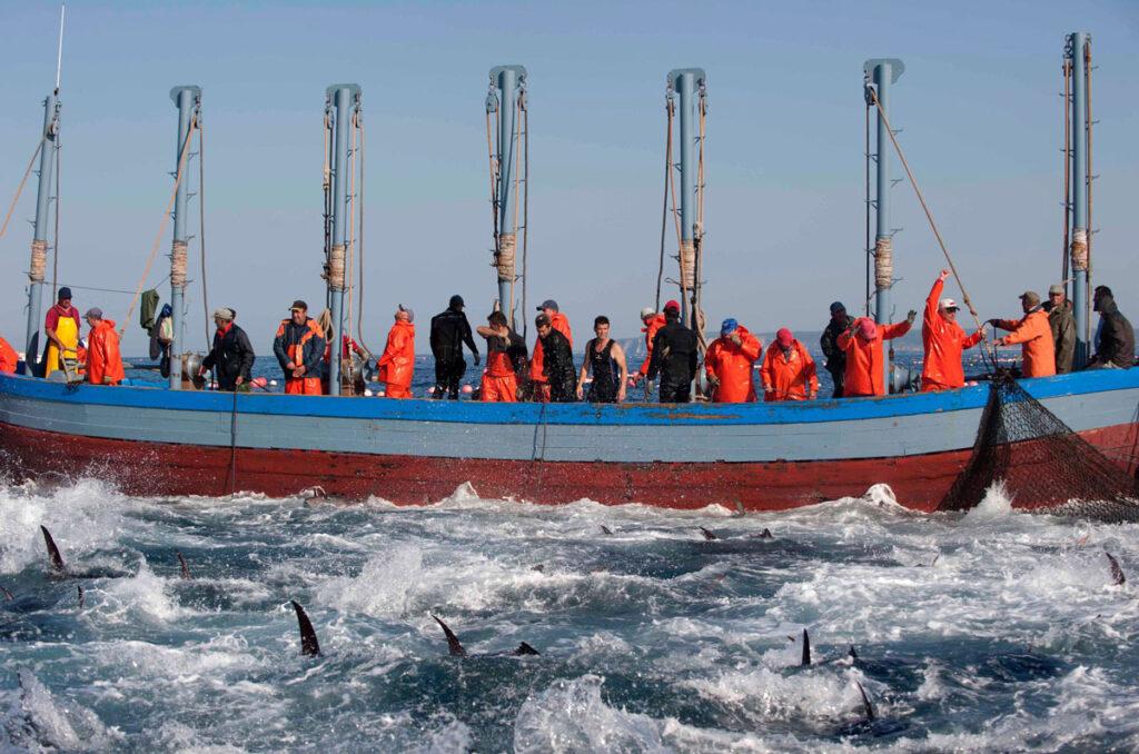 pesca-del-atún-rojo-petaca-chico